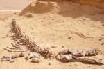 Wadi Al-Hitan desert whale fossil